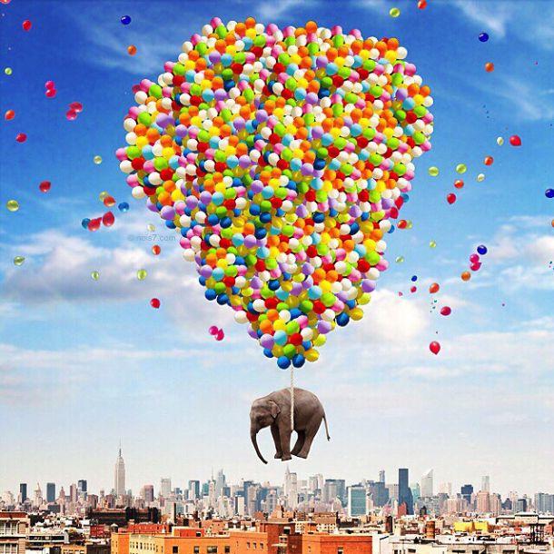 Slon na sare