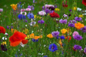 цветы на поле